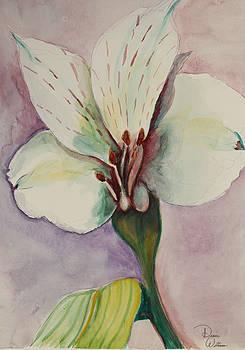 White flower by Denise Jo Williams