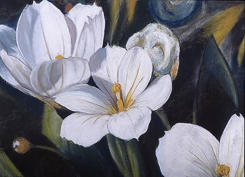 White Flower Study by Victoria Heryet