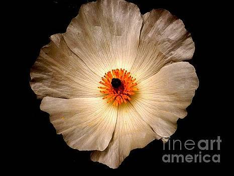 White Flower by Sylvie Leandre