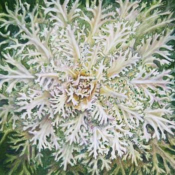 White Flowering Kale by Tara D Kemp