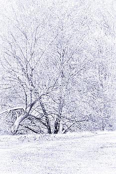 White Flowering Tree by Deb Henman