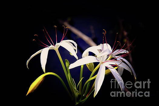 White Flowers by Inspirational Photo Creations Audrey Woods