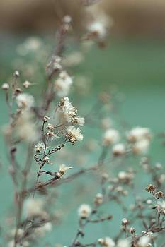 White Flowers by Renee Althouse
