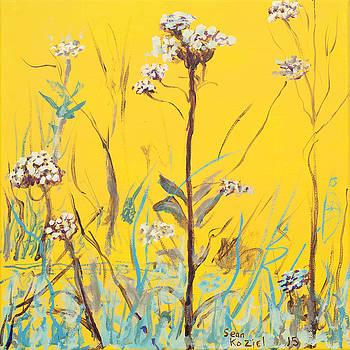 White Flowers by Sean Koziel
