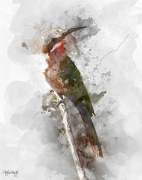 White-fronted Bee-eater by Petrus Bester