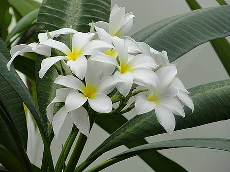 White Funeral Flowers by Mozelle Beigel Martin