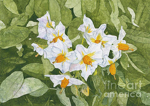 White Garden Blossoms Watercolor on Masa Paper by Conni Schaftenaar