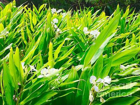 White Ginger in the rainforest  by Lehua Pekelo-Stearns