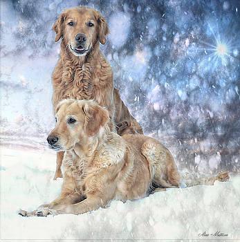 White gold  by Alan Mattison