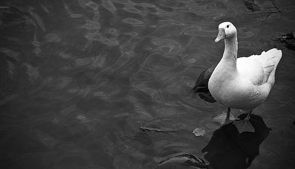 White Goose by Jessica Bouloutian