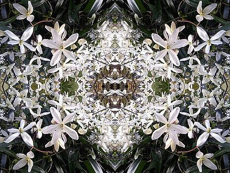 White Hedge Flower Mandala 1 by Julia Woodman