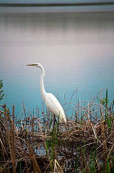 White Heron in Oxford Michigan by Samantha Boehnke