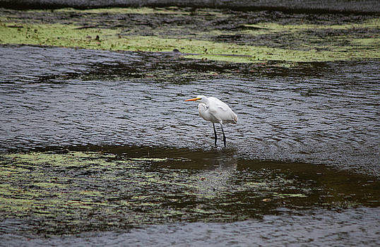 White Heron on the Hudson by Jeff Severson