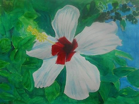 White Hibiscus by Ramon Bendita