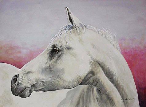 White Horse- Arabian by Elaine Booth-Kallweit