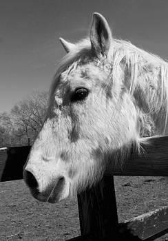 Tina McGinley - White Horse Dreamer