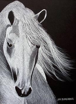 White Horse by Jim Bumgarner