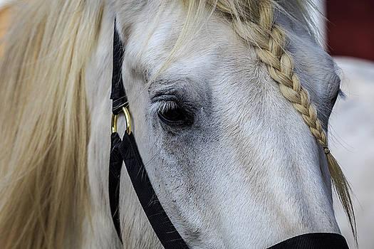 White Work Horse by Jim Gillen