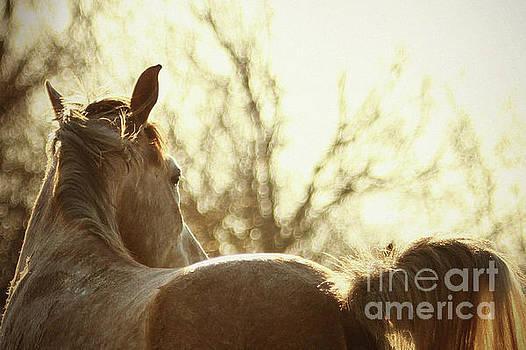 Dimitar Hristov - White Horse Portrait on The Sunset Sky
