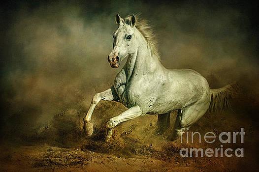 White horse Running wild Equestrian art photography by Dimitar Hristov