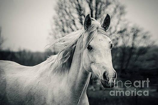 Dimitar Hristov - White Horse Shaggy morning horse