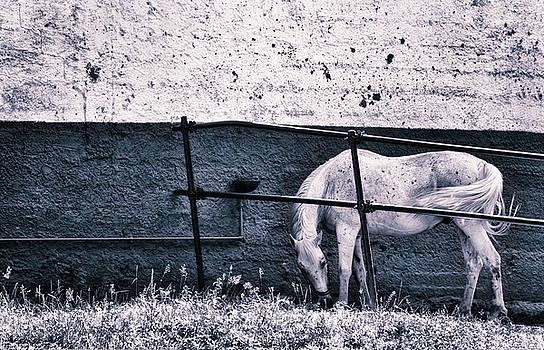 Silvia Ganora - White Horse