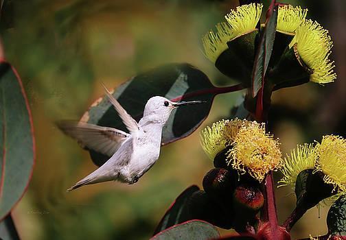 White Hummingbird 2 by Xueling Zou