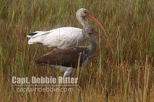 White Ibis 3457 by Captain Debbie Ritter