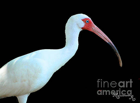 White Ibis by Mariarosa Rockefeller