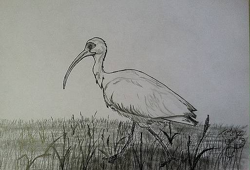 White Ibis by Tony Clark