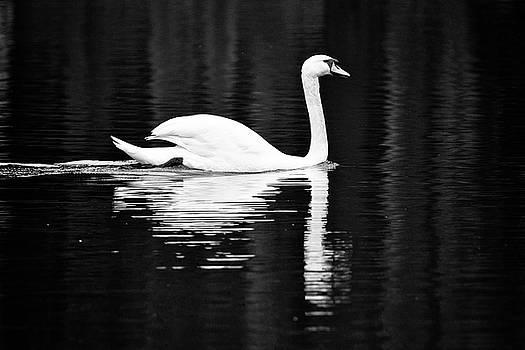 White in Black  by Teemu Tretjakov