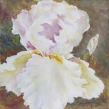 White Iris by Carolyn Bell