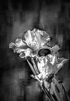 Leif Sohlman - White iris on abstract background BW #g4