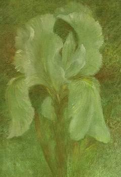 White Iris Painterly Texture by Judith Cheng