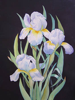 White Iris by Teresa Boston