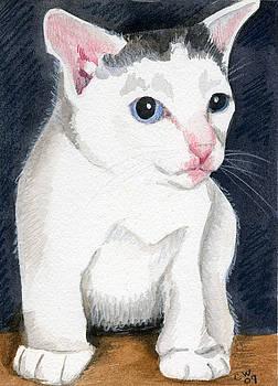 White Kitten by Christine Winship