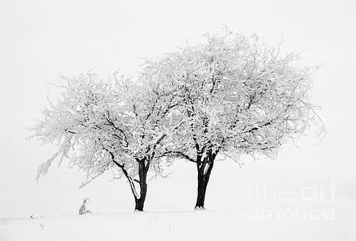 Mike Dawson - White Lace