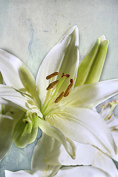 White Lilies on Blue by Jacqi Elmslie