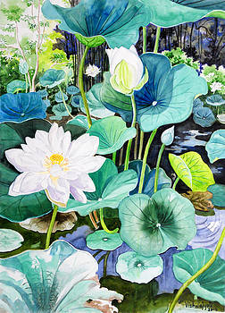 White Lotus 1 by Vishwajyoti Mohrhoff
