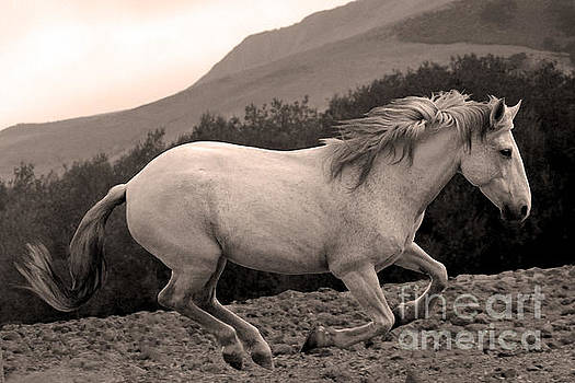 Heather Kirk - White Mare Gallops #1 -  Close Up Sepia