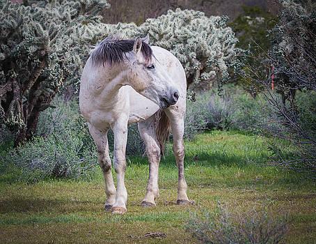 Rosemary Woods-Desert Rose Images - White Mare-IMG_7279-2017
