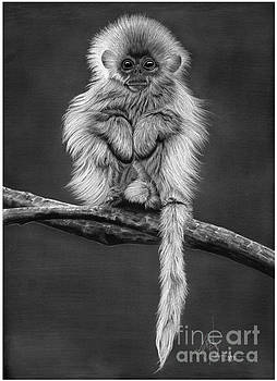 White Monkey by Murphy Elliott