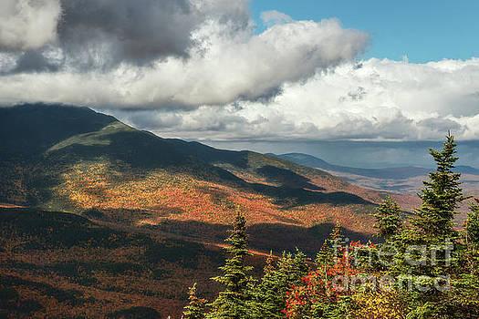 White Mountain Foliage by Sharon Seaward