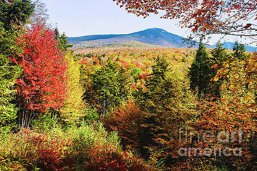 White Mountains Autumn Colors by George Oze