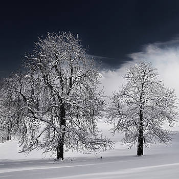 White Nature by Philippe Sainte-Laudy
