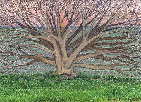 White Oak on the Bay by Harriet Emerson