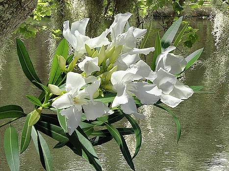 White Oleander by Lakeside by Spadecaller