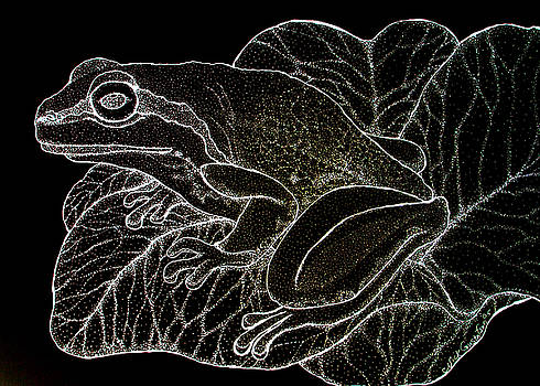 Nick Gustafson - White on Black Frog