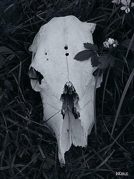 White on White by Alana  Schmitt