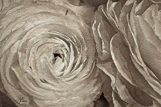 White on White Rose by Joan Reese